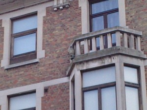 Owl in a balcony